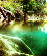 As above so below (flowerweaver) Tags: outdoor waterscape river halfsubmerged underwater roots trees baldcypress vines riverbank serene green teal reflections dreamy dream surreal ethereal aquatic light summer swimming