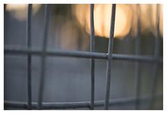 Fences at nightfall _ 2 (leo.roos) Tags: nightfall sunset zonsondergang fences hekken hek fence fencing projectionlens projector projectorlens astroberlin a7s astrokinocoloriv5014 darosa leoroos