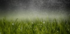 Grass (Explored) (g3az66) Tags: grass thefirstletterofmyname macromondays macro