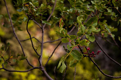 So Green (gabi_halla) Tags: outdoor forest green leaf leaves red dof enchanted tree bokeh autumn colors colorful colours canon nature