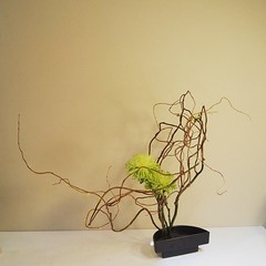 My intertwined #ikebana