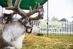 Kent_County_Show_2014_Highlights_040