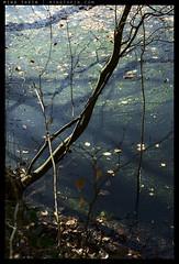 _8B19381 copy (mingthein) Tags: life zeiss t landscape pond nikon republic czech availablelight apo carl ming cesky raj skala planar otus 1485 onn 8514 hruba d810 thein zf2 photohorologer mingtheincom mingtheingallery