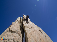 Alpine Chough sailing (HendrikMorkel) Tags: alps mountaineering chamonix alpinechough alpineclimbing artedescosmiques arcteryxalpineacademy2015