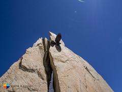 Alpine Chough sailing (HendrikMorkel) Tags: alps mountaineering chamonix alpinechough alpineclimbing arêtedescosmiques arcteryxalpineacademy2015