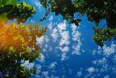 Nebo (Sareni) Tags: light summer sky colors leaves clouds branches serbia july sm leto vojvodina twop srbija nebo banat 2016 grane boje svetlost oblaci lisce alibunar juznibanat savemuncana