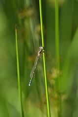 libe2 (bidueiro) Tags: naturaleza insectos macro macrofotografa