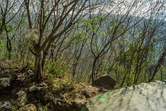 DSC03179 (Braulio Gmez) Tags: barrancadehuentitn biodiversidad caminoamascuala canyon canyonhuentitan faunayflora floresyplantas guadalajara jalisco mountainrange naturaleza sierra senderismo paisaje barrancadehuentitn barranca huentitn ixtlahuacandelro mxico guardianesdelabarranca