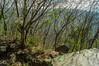 DSC03179 (Braulio Gómez) Tags: barrancadehuentitã¡n biodiversidad caminoamascuala canyon canyonhuentitan faunayflora floresyplantas guadalajara jalisco mountainrange naturaleza sierra senderismo paisaje barrancadehuentitán barranca huentitán ixtlahuacandelrío méxico guardianesdelabarranca