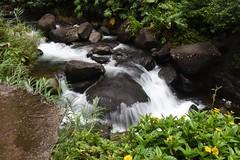 DSC_5437 (meganewens) Tags: maui iao needle sunset kaanapali lahaina hawaii digital black white waterfall