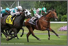 Deauville wins the Belmont Derby (Spruceton Spook) Tags: horses horseracing deauville belmontpark starsandstripesfestival aidenobrien belmontderbyinvitational