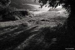 Stoke Park 6.30 this morning (zolaczakl ( 2 million views, thanks everyone)) Tags: bristol bristolinmonochrome mono monochrome lightshadow trees earlymorninglight earlymorning blackandwhitebristol blackandwhite stokepark obelisk nikond7100 nikonafsnikkor24120mmf4gedvrlens photographybyjeremyfennell uk england 2016 august