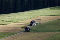Prati (Guido Barberis) Tags: field moos moso sextet sesto prati verde green fieno