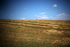Stoppelfeld (gripspix (Catching up!)) Tags: 20160807 nature natur stoppelfeld stubblefield holgalensforcanon plastiklinse badlens vignettierung