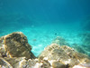 little fish in the blue blue water (Martin Lopatka) Tags: corsica france nature beahes mediterranean coast sea rocky gopro wide blue water underwater waterproof outdoors