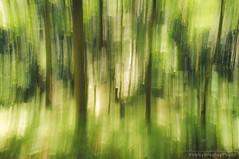 Summer Woods (bobbybradley) Tags: longexposure trees motion blur leaves forest movement woods artistic hiking northcarolina kinetic wilderness brevard