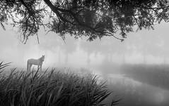 Dark Horse (D.ROS) Tags: 2016 brown fog foggy grass green hazy mist misty morning nederland path rural schagen sunrise tree wood supershot