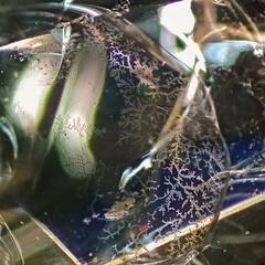 Yttrium Aluminum Garnet (YAG) (Serbian Dictator) Tags: inclusion gemology mobile phone yag dendrites colour fissure macro nokia lumia 925 gem microscope