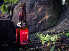 Budweiser (fishyfish_arcade) Tags: 20mmf17 gx7 lumix panasonic panasonic20mmf17asphlumixg leftbehind budweiser beer bottle