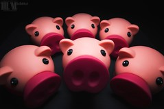 Trs Cochon? (M.Visions Photographie) Tags: pig doll sony f2 12mm cochon nex samyang strobist yongnuo nex6