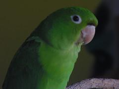 (Ruan Campos) Tags: fotografias aves coresdobrasil br brasil