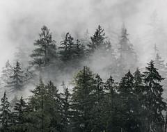Campingplatz Forstgarten (Frenkieb) Tags: austria osterreich campingplatz forstgarten nationalpark gesuse mist tree fog trees