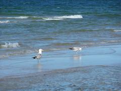 Gaviotas (Azaharito) Tags: blue naturaleza nature water azul mar agua mare blu poland polska balticsea pomeranian azzurro polonia woda morze batyk morzebatyckie pomorze karwia marbaltico