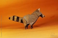 Fumiaki Kawahata - Raccoon (IverRu) Tags:  origami iver kawahata raccoon animal