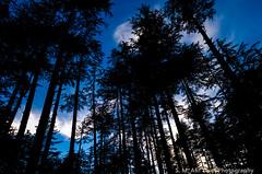 Ushu Forest Kalam Pakistan (syedafif) Tags: pakistan sunset landscape kalam northernareaspakistan