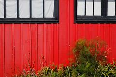 cabane en couleur #9 (S amo) Tags: cabane hut oysterfarmer ostreiculteur oleron island le couleurs color colored colours artiste artist bois wooden window fenetre red rouge noir black