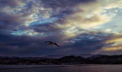 Morning Seagull (Johnnyvacc) Tags: cruise italy canon laspezia