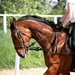 Rider and her horse (dora.klenovszki) Tags: mare brown gallop canter rider horseriding horse