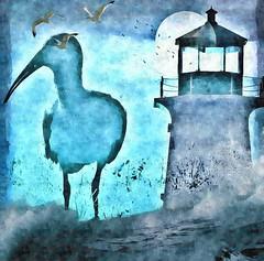 bird island (CatnessGrace) Tags: ocean blue sea lighthouse bird birds blues