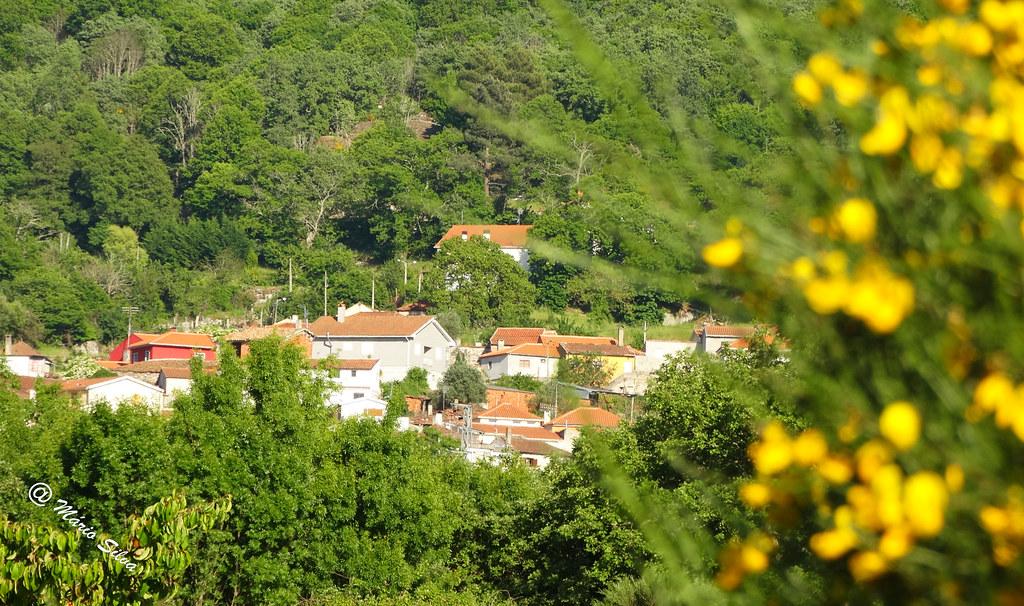 Águas Frias (Chaves) - ... vista parcial da Aldeia por entre as giestas floridas ...