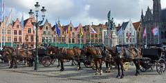 Brugge (Zeldenrust) Tags: paard horse pferd cheval caballo belgi belgique belgium brugge bruges belgien blgica vlaanderen flanders flandern flandre flandres flandes waitingforthetourists