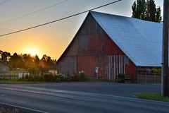 Big Red Barn (Reed 1949) Tags: barn red sunset rural road market flowers plants trees fence nikon nikond5200 tamron18270 vancouver washingtonstate