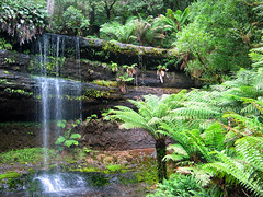 russell falls - tasmania, australia 4 (Russell Scott Images) Tags: australia tasmania russellfalls russellfallscreek centralhighlands waterfall rain forest