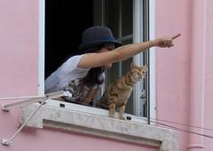 565-June'16 (Silvia Inacio) Tags: lisbon lisboa portugal window janela gato gatos cat cats tabby