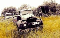 Mack got the knife...(HTT) (BillsExplorations) Tags: truck truckthursday mack macktheknife pearlywhite macktruck junkyard international old abandoned forgotten discarded vintage rust selectivecolor illinois abandonedillinois