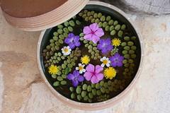 Flower basin (huzu1959) Tags: a7ii alpha7ii sonya7ii alphaa7ii sonyalpha7ii sonyalphaa7ii sony okinawa flower basin