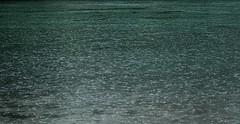 (tsibley) Tags: river rain water skagitriver skagitvalley
