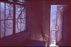 (bensn) Tags: pentax lx industar 50mm f35 film slide velvia 100 japan haikyo abandoned building wall window door vine branches