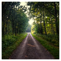 INSTAGRAM 365 Day 253: The Road Goes Ever On (tomas_nilsson) Tags: instagram365 sweden lund dalby skrylle forest woods trees road gravelroad path leadinglines towardsthelight green thingsseenwhilewalking cellphonephotography hdr lg g4 snapseed postprocessing