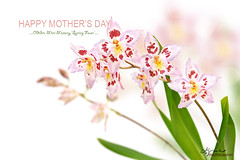 Odtdm. Mini Mutany 'Spring Fever' (Lijuan Guo Photography ( Hollow Bamboo)) Tags: pink plant orchid flower nature garden happy star spring day mothers card tropical oncidium greeting hybrids odtdm