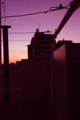 (micacacciola) Tags: sunset atardecer paz aire libre terraza serenidad buenoaires