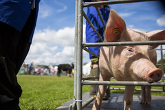 Kent_County_Show_2014_Highlights_086