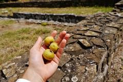 Wild Pears (yuliyadraganova) Tags: city travel summer art history church nature architecture buildings landscapes ruins europe capital roadtrip palace explore bulgaria monuments sculptures