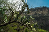 DSC03259 (Braulio Gómez) Tags: barrancadehuentitã¡n biodiversidad caminoamascuala canyon canyonhuentitan faunayflora floresyplantas guadalajara jalisco mountainrange naturaleza sierra senderismo paisaje barrancadehuentitán barranca huentitán ixtlahuacandelrío méxico guardianesdelabarranca