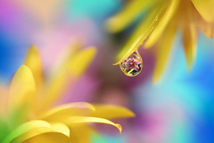 All the colors to make you happy (Marilena Fattore) Tags: tamron canon water drops fantasy nature colors petals reflection green blue paste pink purple softness yellow closeup artisticmacro bokeh