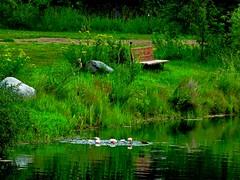 Happy Bench Monday! (peggyhr) Tags: peggyhr bench estates alberta canada dsc00450aa hbm waterlilies reflections lake